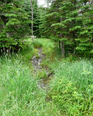 Moose_trail
