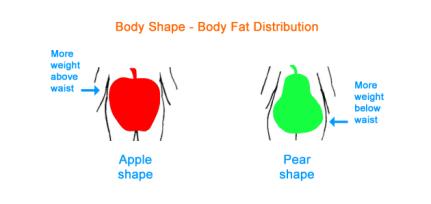 body_shape_2
